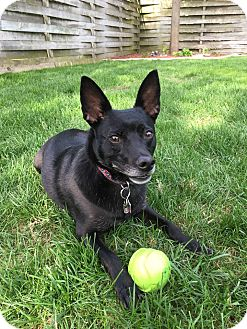 Terrier (Unknown Type, Small) Mix Dog for adoption in Manitowoc, Wisconsin - Buddy