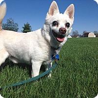Adopt A Pet :: Jupiter - Columbus, OH