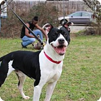 Boxer Mix Dog for adoption in Decatur, Georgia - Sphinn