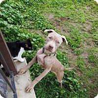 Adopt A Pet :: Lionel - Huntington beach, CA