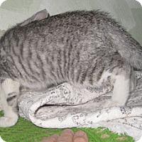 Adopt A Pet :: Chrome - Dallas, TX