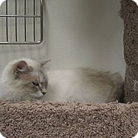 Adopt A Pet :: Molly - Chesapeake, VA