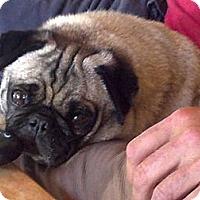 Adopt A Pet :: Lilly - Anaheim, CA