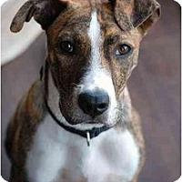 Adopt A Pet :: Milo - Nashville, TN