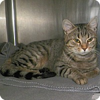 Adopt A Pet :: Ruby - Dover, OH