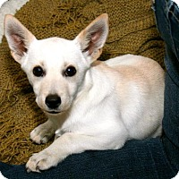Adopt A Pet :: Ginger - Erwin, TN