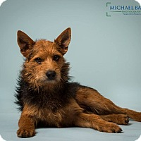 Adopt A Pet :: Bruce - Gentle boy-MEET ME - Norwalk, CT