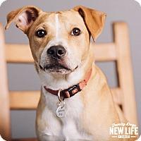 Adopt A Pet :: Poncho - Portland, OR