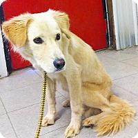 Adopt A Pet :: Crystal - BIRMINGHAM, AL