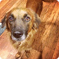 Adopt A Pet :: Lady - San Antonio, TX