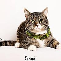 Adopt A Pet :: Panang - Riverside, CA