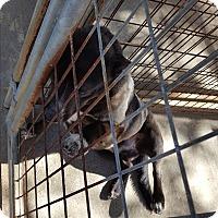 Adopt A Pet :: Odie - Marianna, FL