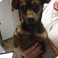 Adopt A Pet :: Richmond-adoption pending - Landenberg, PA