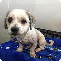 Adopt A Pet :: MADDY - Sherman Oaks, CA