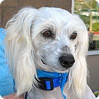 Terrier (Unknown Type, Medium) Mix Dog for adoption in Wildomar, California - Apollo