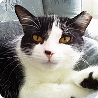 Adopt A Pet :: Fern - N. Billerica, MA