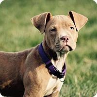 Adopt A Pet :: Marla Hooch - Dayton, OH