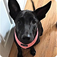 Adopt A Pet :: Disney - Bruce Township, MI