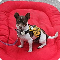 Adopt A Pet :: Java - Santa Monica, CA