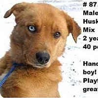 Adopt A Pet :: # 877-09 - ADOPTED! - Zanesville, OH