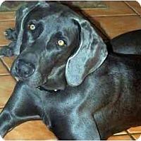 Adopt A Pet :: Taz  **ADOPTED** - Eustis, FL