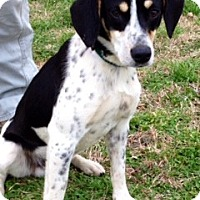 Adopt A Pet :: BAILEY/LOVE BUG!! - Glastonbury, CT
