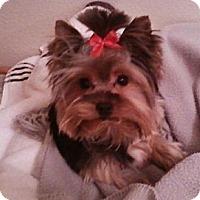 Adopt A Pet :: Daphne - Cleveland, OH