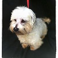Adopt A Pet :: Chase - Hazard, KY