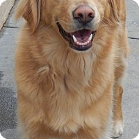 Adopt A Pet :: Beau - Foster, RI