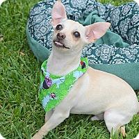 Adopt A Pet :: Tequilla - San Leon, TX