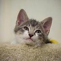 Adopt A Pet :: Neptune - Dallas, TX