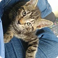 Adopt A Pet :: Risotto - Umatilla, FL