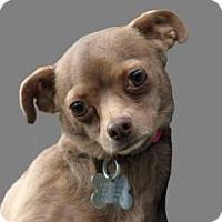 Adopt A Pet :: Kelby - South Amboy, NJ