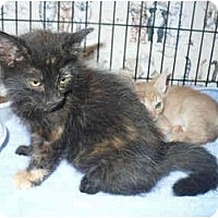 Adopt A Pet :: Sophie - Colmar, PA