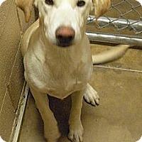 Adopt A Pet :: Charlie - Wickenburg, AZ