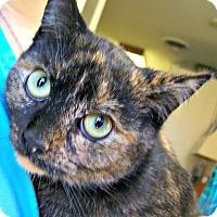 Adopt A Pet :: Tortellini - Toledo, OH