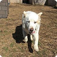 Adopt A Pet :: Tobi - Gadsden, AL