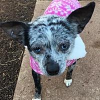 Adopt A Pet :: Taisie - Southeastern, PA