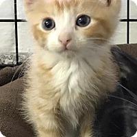 Adopt A Pet :: Reed - River Edge, NJ