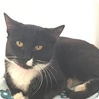 Adopt A Pet :: Sable - Cumming, GA