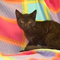 Adopt A Pet :: Fabio - East Smithfield, PA