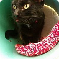 Adopt A Pet :: Dawnita - Pittsburg, KS