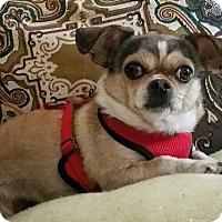 Adopt A Pet :: Bella Jean - Garner, NC
