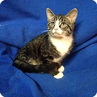 Adopt A Pet :: Jasper - Newport, KY