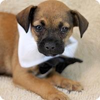 Adopt A Pet :: Cruise - Dalton, GA