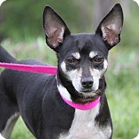 Adopt A Pet :: Pixie - Marietta, OH