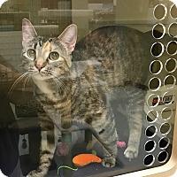 Adopt A Pet :: Mia - Huntley, IL