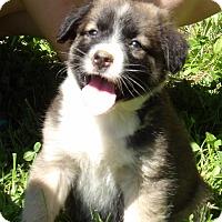Adopt A Pet :: Sahara (6 lb) Video - Sussex, NJ