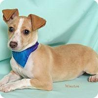 Adopt A Pet :: Winston - Kerrville, TX