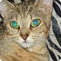 Adopt A Pet :: Zuli - Fort Lauderdale, FL